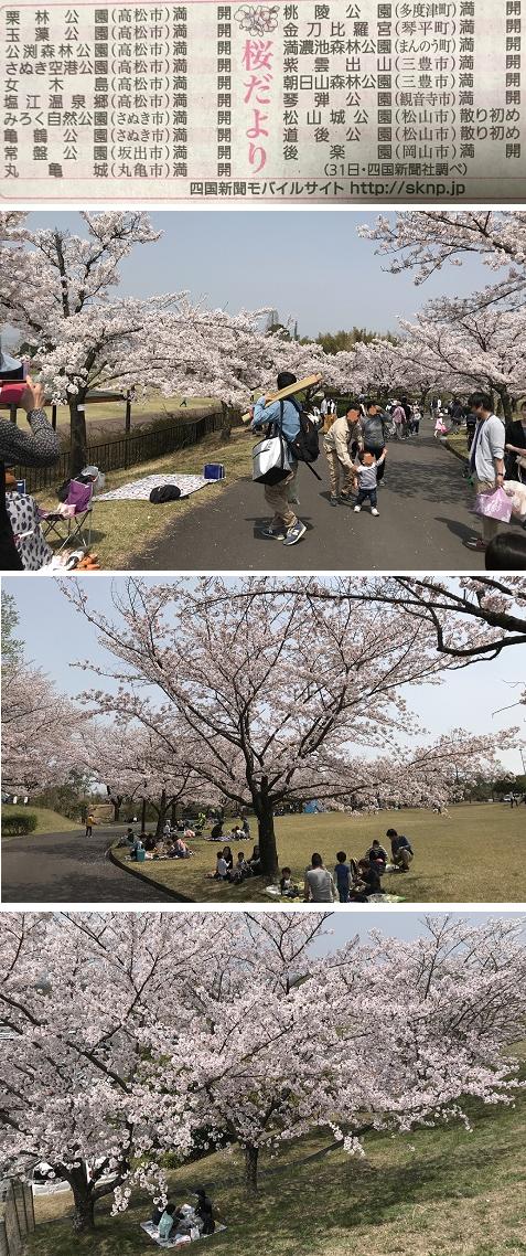 220180401さぬき空港公園 2