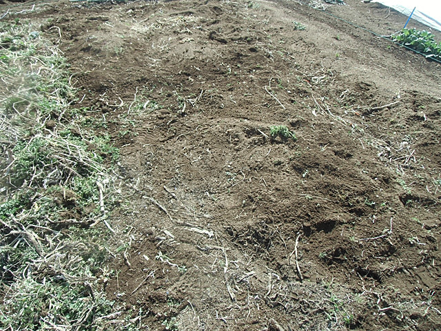 草をむしったところ