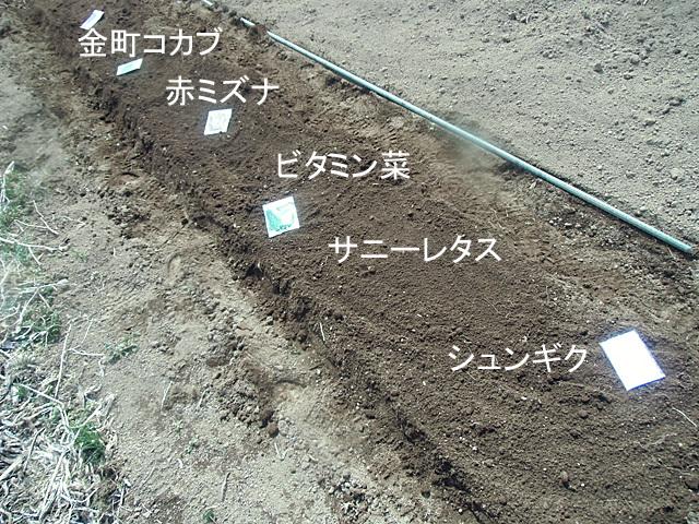 種をレイアウト