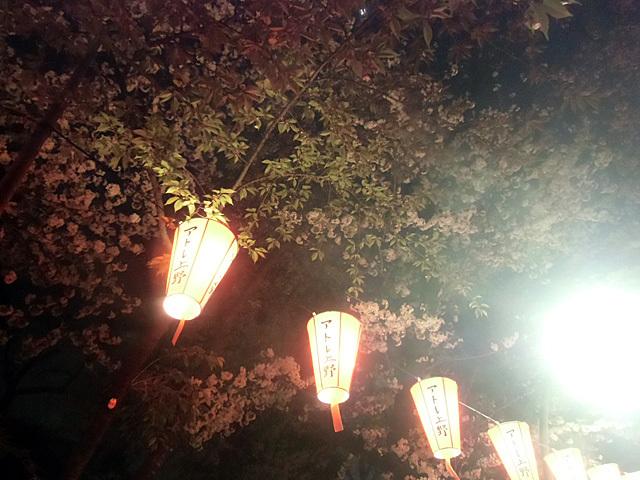 上野公園の夜桜