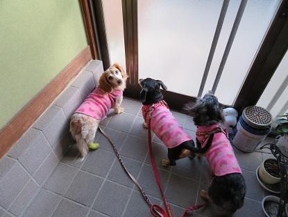 さぁ~お散歩行くでちよっ!