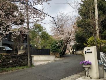 20180324桜