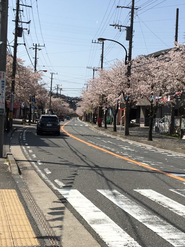 逸見の桜並木