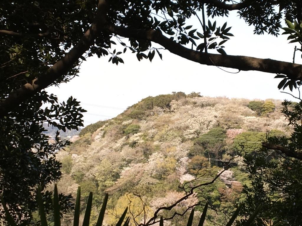 衣笠山を眺める