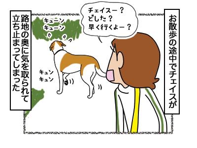03032018_dog1.jpg