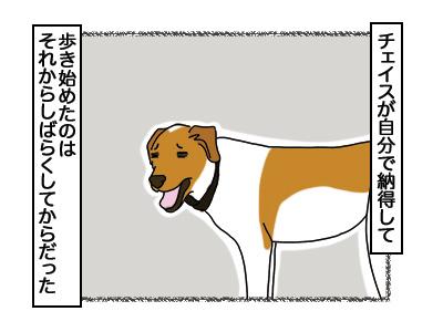 03032018_dog5.jpg