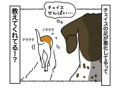 05032018_dog4.jpg