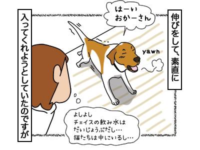 06032018_dog2.jpg