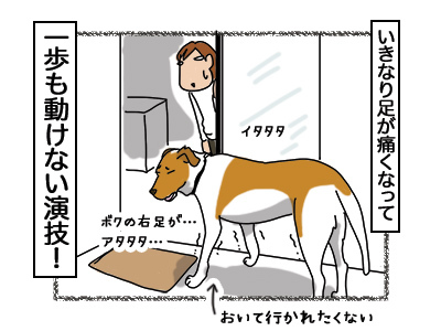 06032018_dog4.jpg