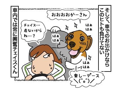 07032018_dog4.jpg