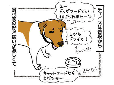 12032018_dog1.jpg