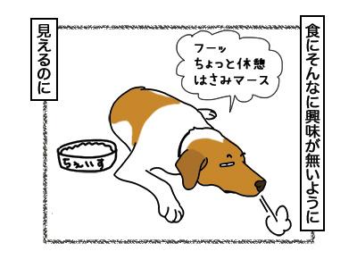 12032018_dog3.jpg