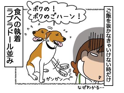 12032018_dog4.jpg