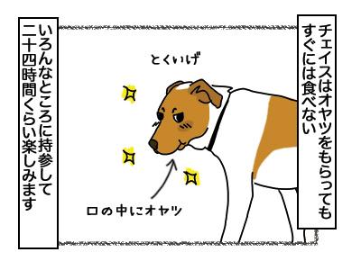14032018_dog1.jpg