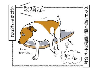 14032018_dog5.jpg