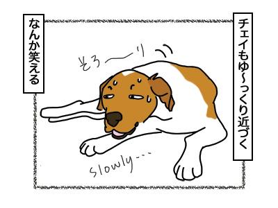 16032018_dog5.jpg