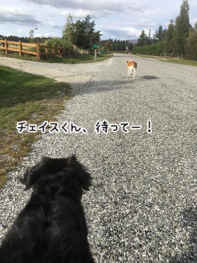 20032018_dog1.jpg