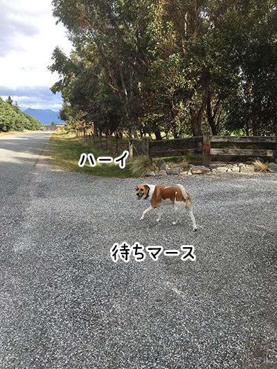 20032018_dog2.jpg