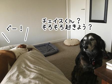 20032018_dog5.jpg