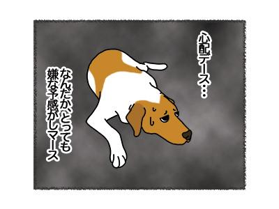 22032018_dog2.jpg