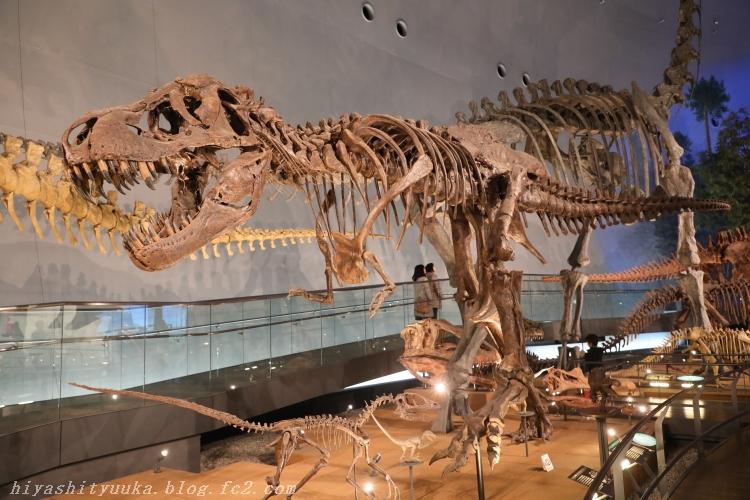 6618 恐竜博物館-SN