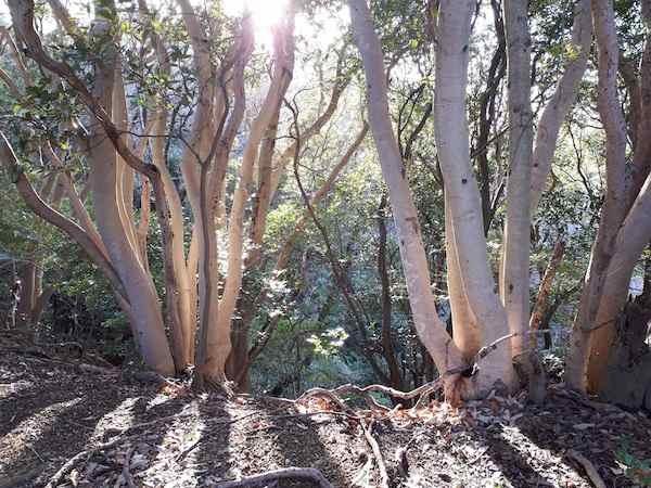 「光る木」2018.02.11