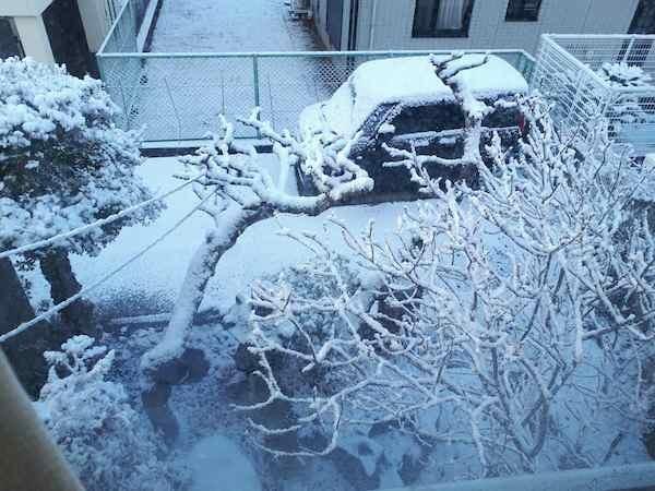 和歌山で積雪