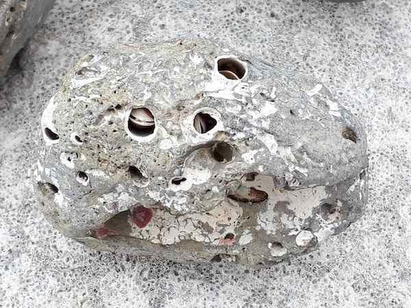 貝が穴をあける