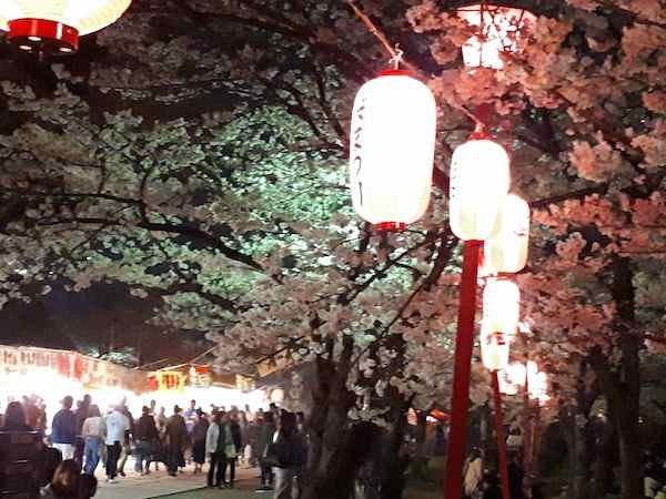 夜桜2018①