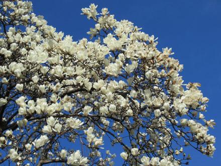 やっと春の到来