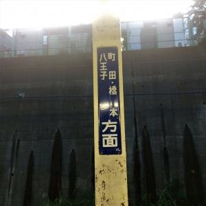 2017菊名 (79)