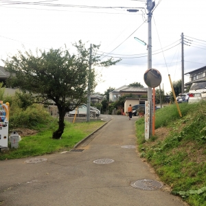 2017菊名 (60)