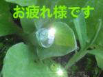 千人切子(ちひときりこ)