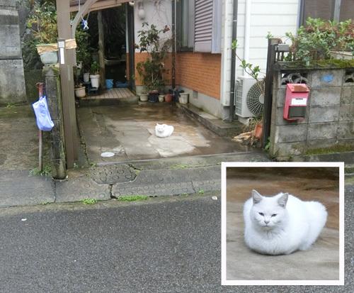 本日の、猫発見。