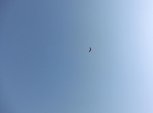練習では、良く飛ぶのよ。ホントに。