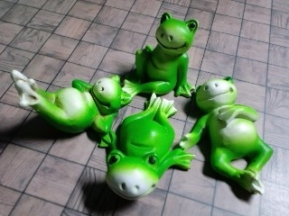 Tree Frog アマガエル