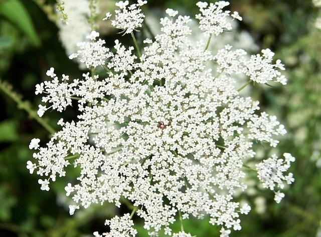 flower-18351_640.jpg