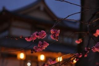 180309kitano(15).jpg