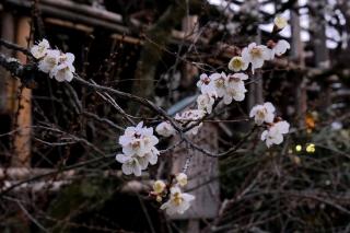 180309kitano(2).jpg