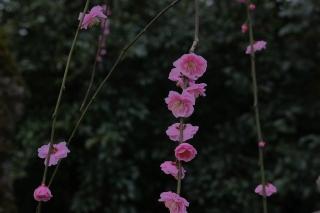 180309kitano(3).jpg