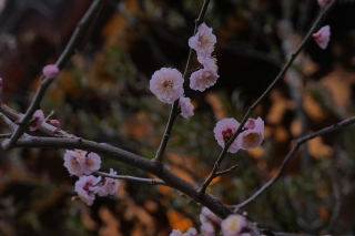 180309kitano(4).jpg