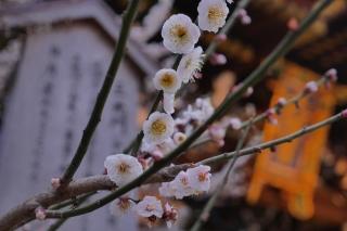 180309kitano(6).jpg