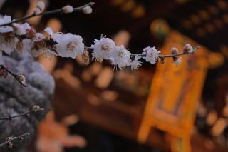 180309kitano(7).jpg