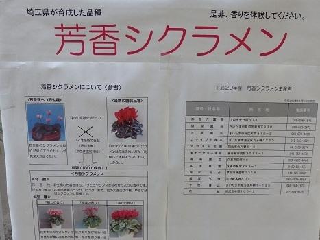 きれぎれの風彩 芳香シクラメン 180225-2
