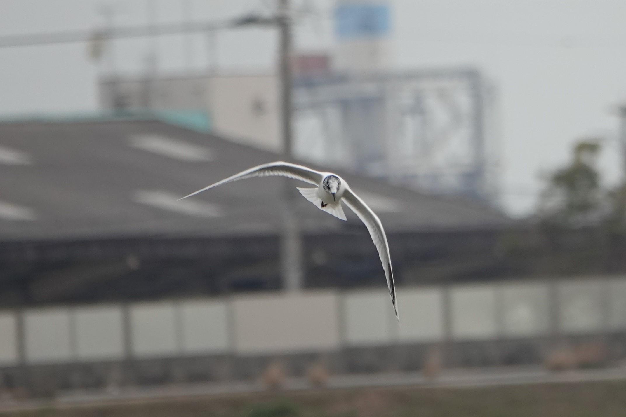 夏羽スグロかメモ5