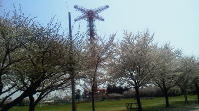 習志野駐屯地の桜