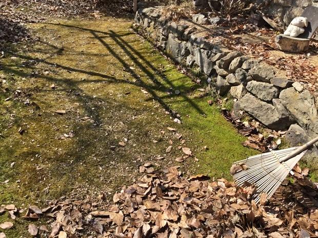 春の落ち葉掃き