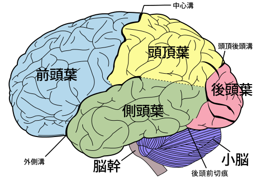 512px-Brain_diagram_ja_svg.png