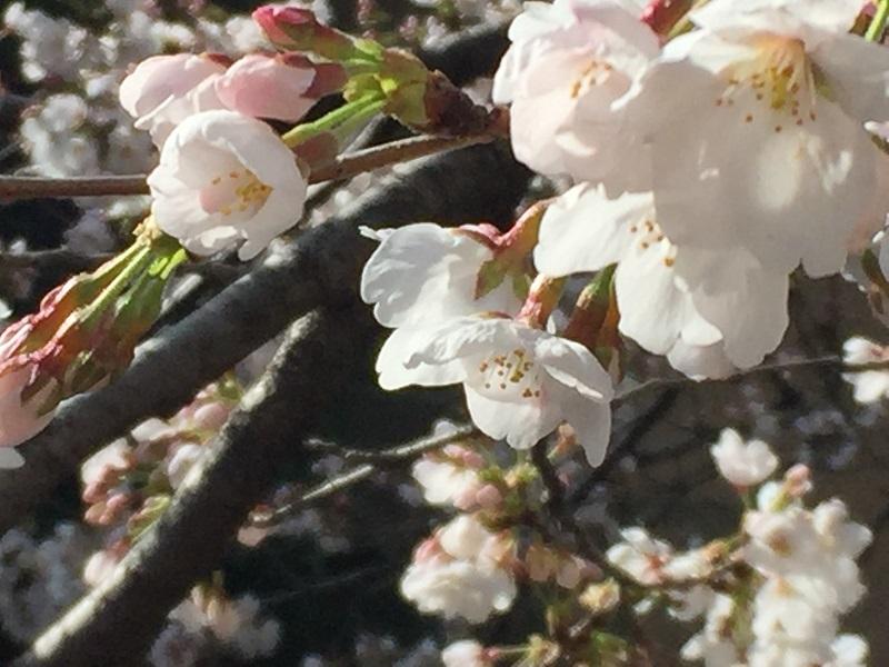 京都散歩 027