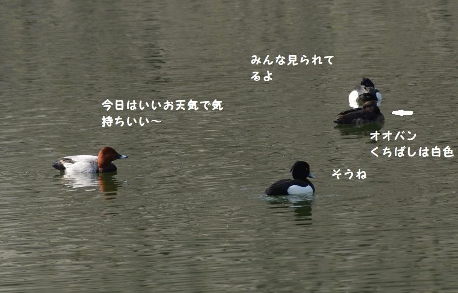 DSC_6738.jpg